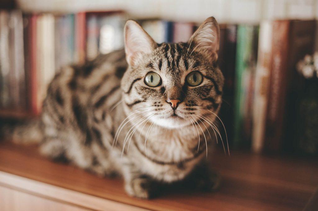 Katze - Nicht immer hygienisch